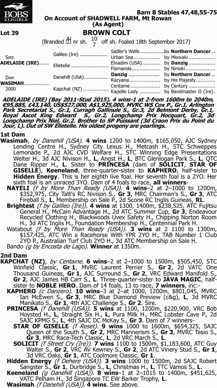 Inglis - 2018 Great Southern Sale - Lot 39, Adelaide (IRE) x Wasimah