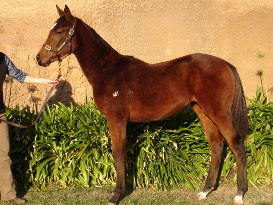 Inglis - 2013 Great Southern Sale - Home