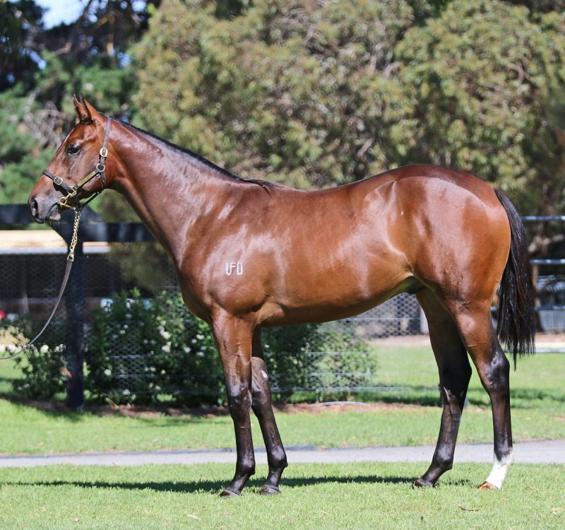459b10a4b539 Inglis - 2016 Melbourne Premier Yearling Sale - Search