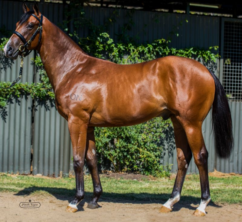 Inglis - 2016 Melbourne Premier Yearling Sale - Lot 717, Zoffany