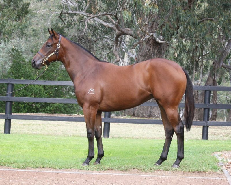 654bbf7211 Inglis - 2016 Australian Easter Yearling Sale - Lot 399, Pierro x ...