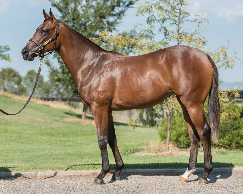Inglis 2017 Classic Yearling Sale Lot 393 The Factor Usa X  # Muebles Dencina Granada