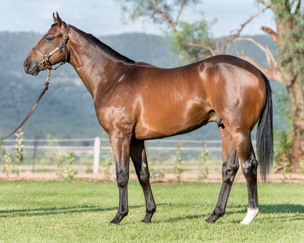 Inglis 2017 Classic Yearling Sale Lot 199 Bel Esprit X Shanambah Sheet Set Lily King Size Click To View Gallery