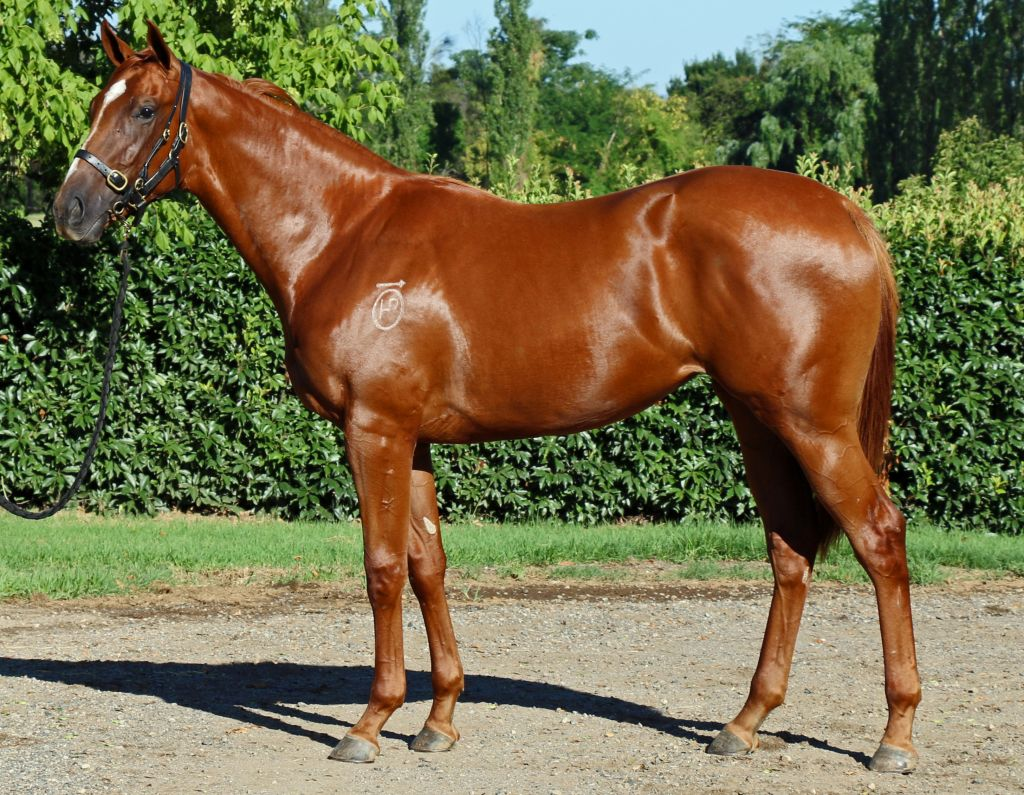 Inglis - 2017 Classic Yearling Sale - Search