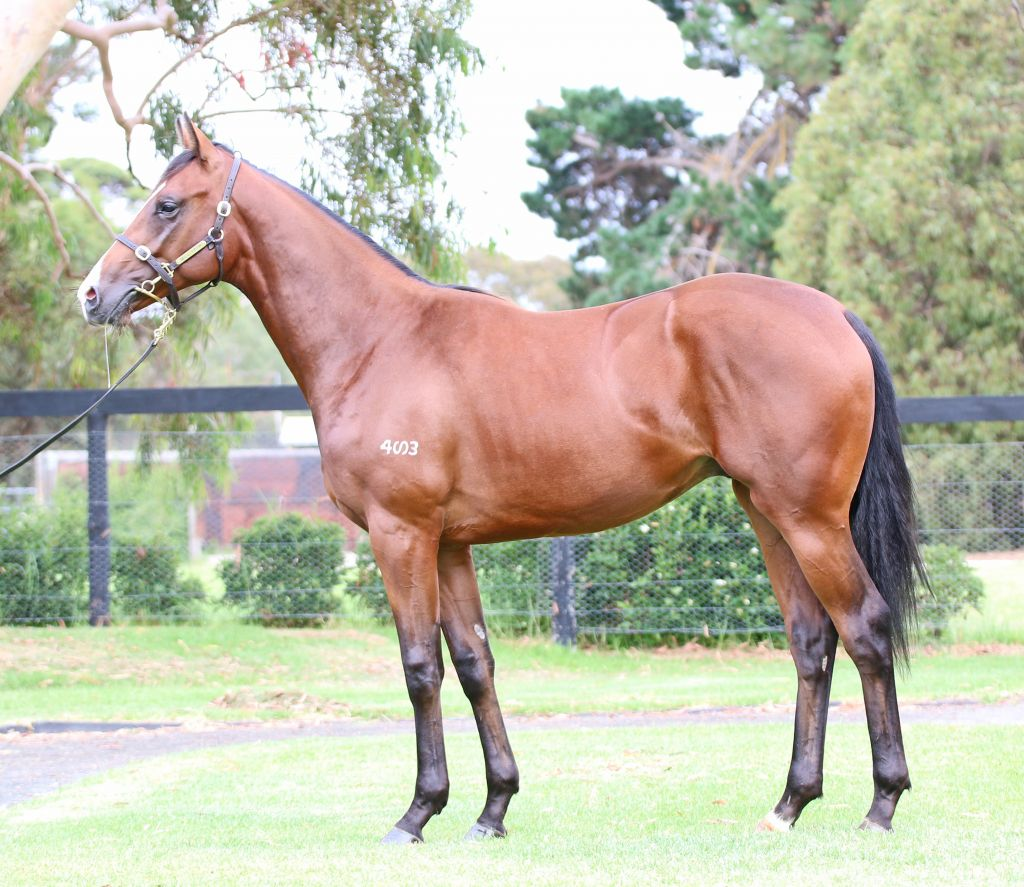 Inglis - 2017 Melbourne Premier Yearling Sale - Lot 110, Camelot (GB ...