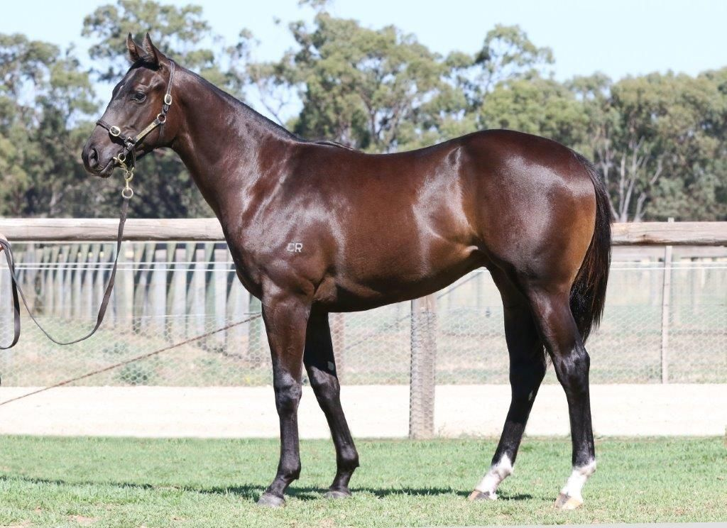 Inglis 2017 Melbourne Premier Yearling Sale Lot 317 More Than