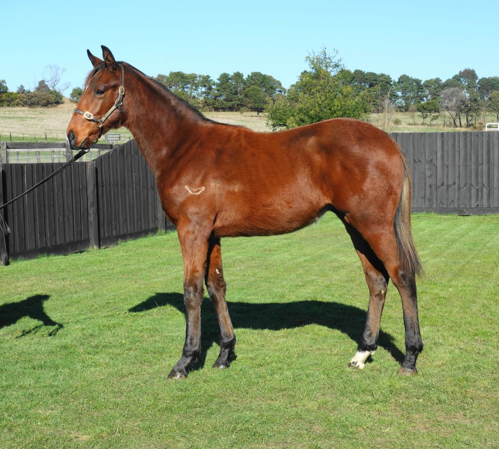 Inglis - 2017 Great Southern Sale - Lot 371, Dissident x