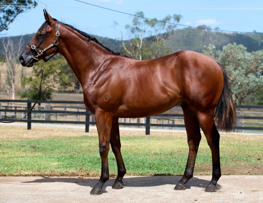 6df2d956d2 Inglis - 2018 Classic Yearling Sale - Lot 467