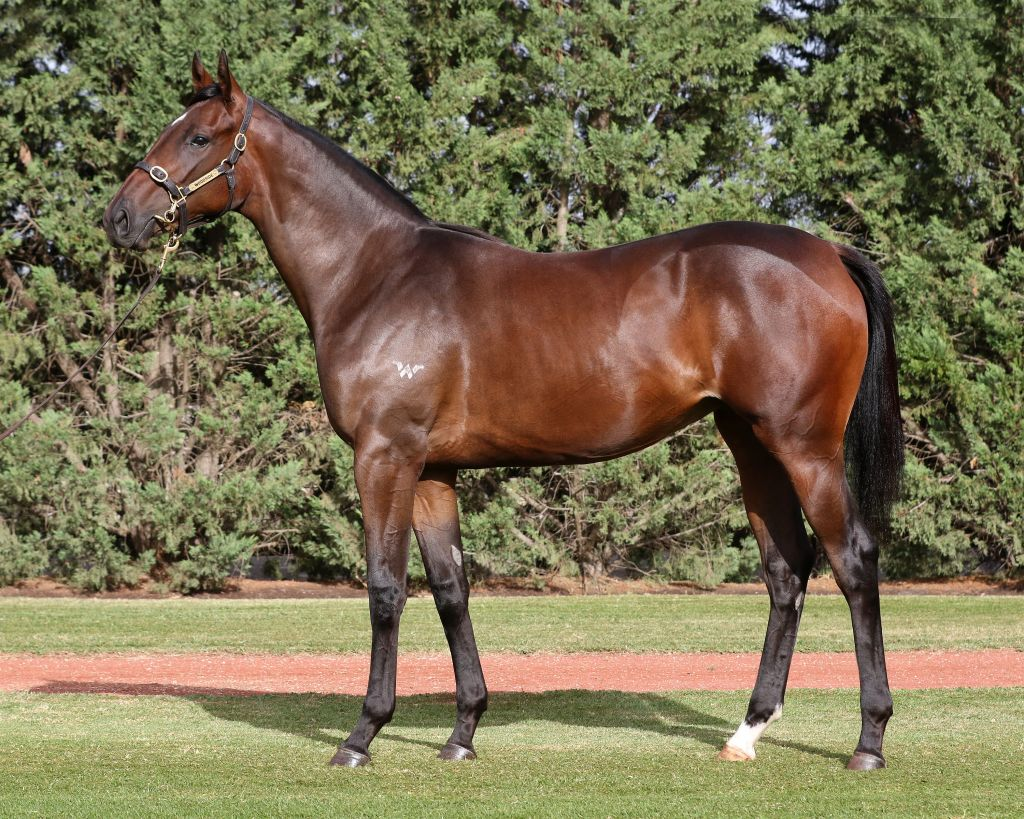 Inglis - 2018 Melbourne Premier Yearling Sale - Lot 82, Written