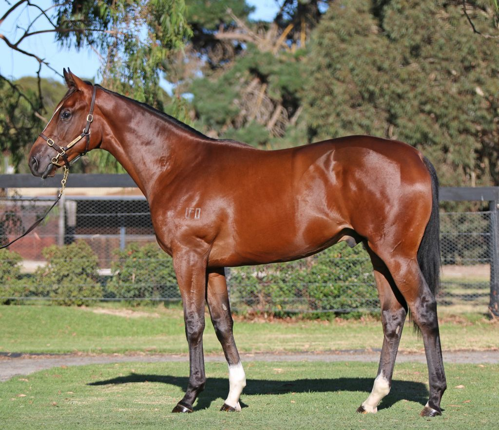 Inglis 2018 Melbourne Premier Yearling Sale Lot 120 Rebel Suzuki Shooter Fi 115 R Raider X Queens Kiss
