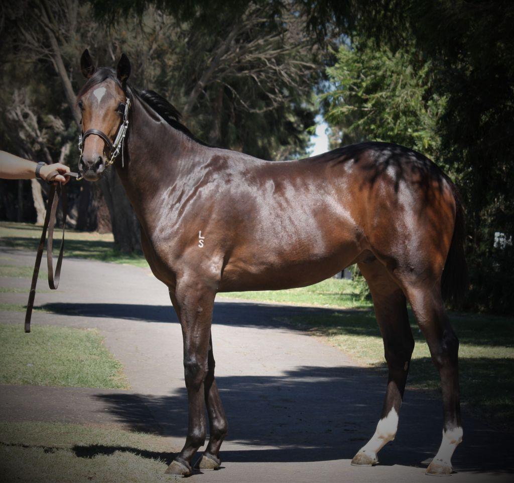 Inglis - 2018 Melbourne Premier Yearling Sale - Lot 683