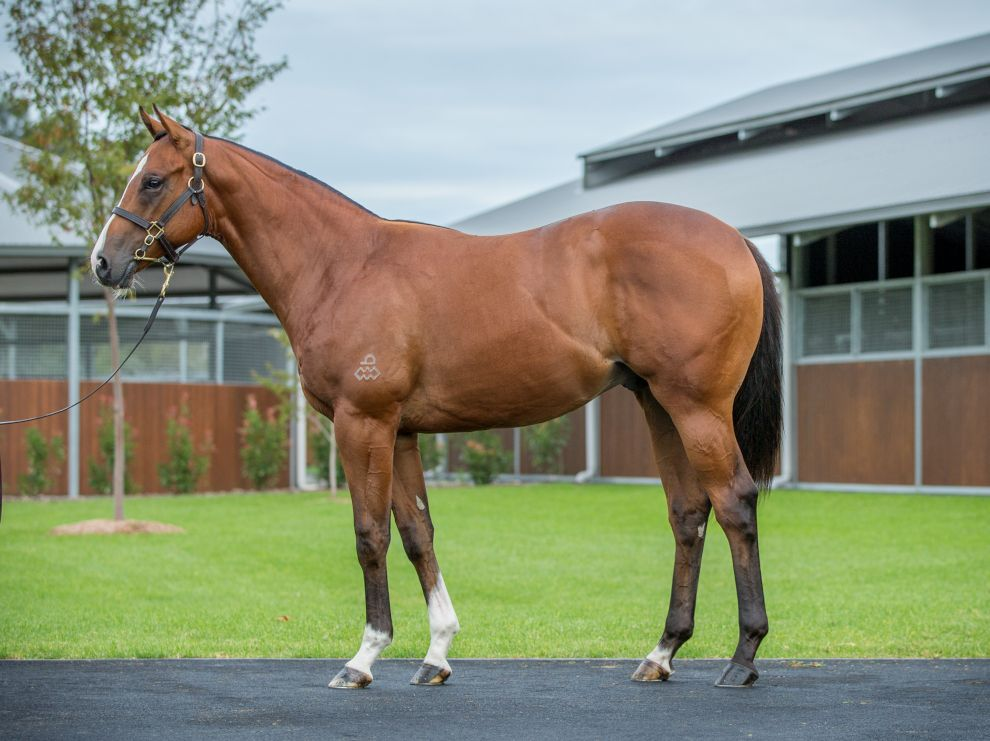 Inglis - 2019 Australian Easter Yearling Sale - Lot 169, Not