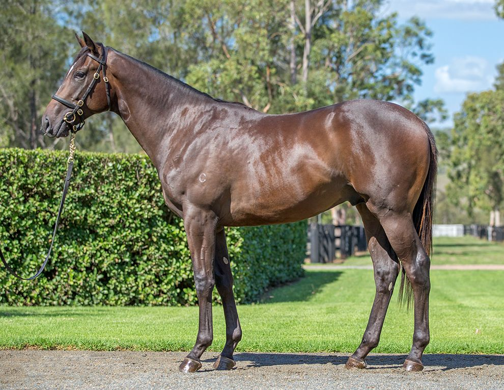 Inglis - 2019 Australian Easter Yearling Sale - Search