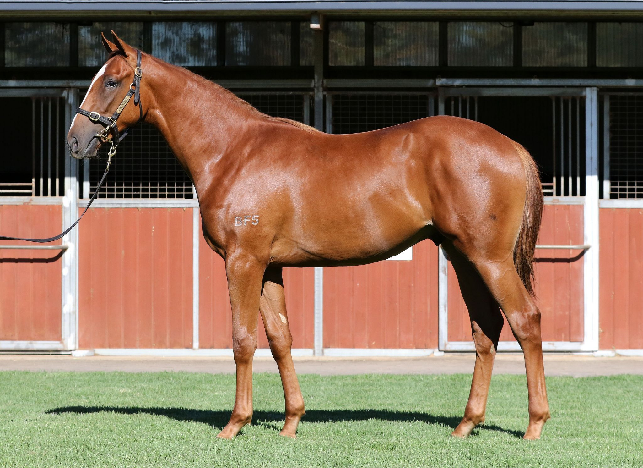Inglis - 2017 Melbourne Premier Yearling Sale - Home