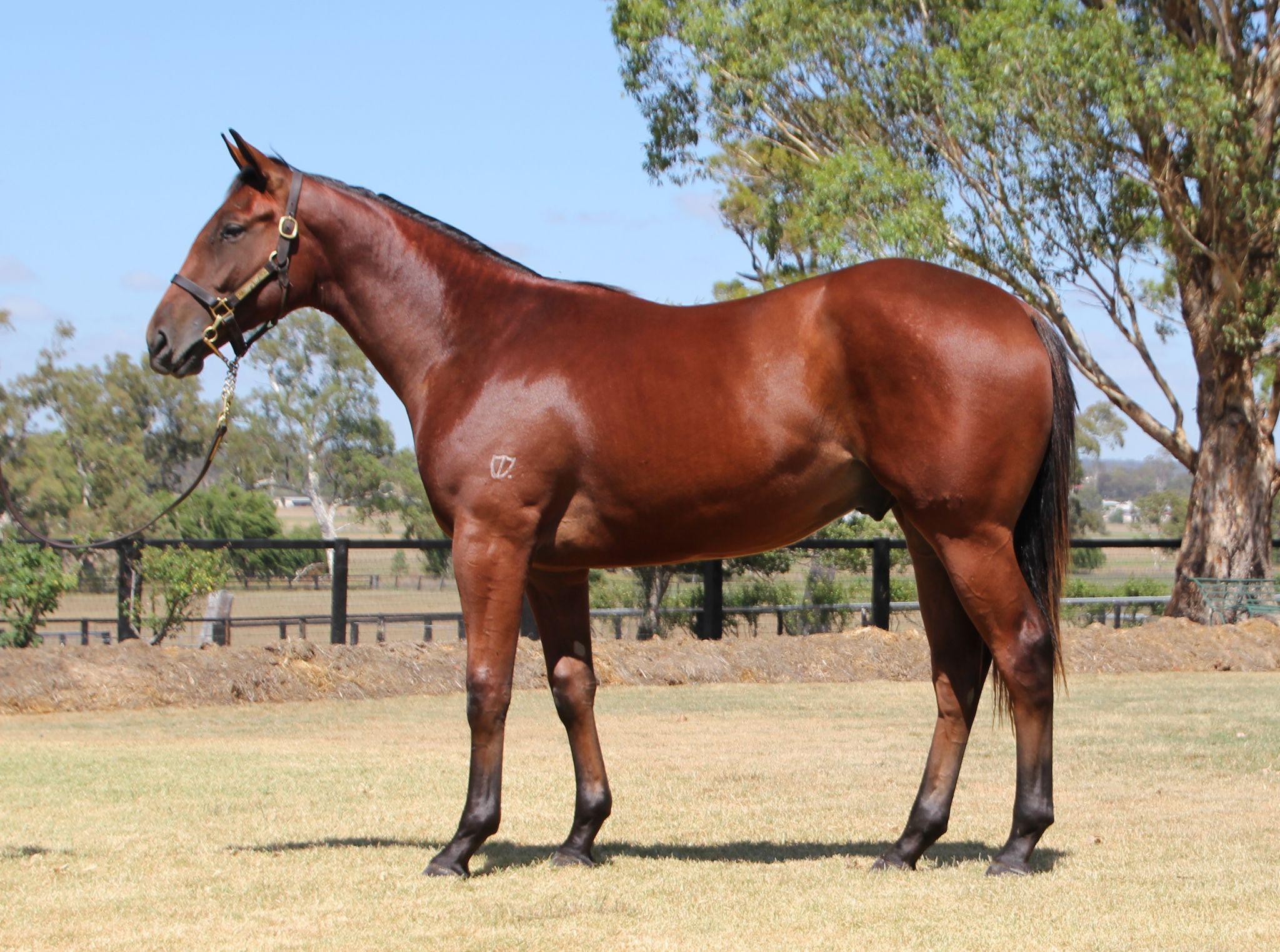 09f419929fe6 Inglis - 2018 Classic Yearling Sale - Home
