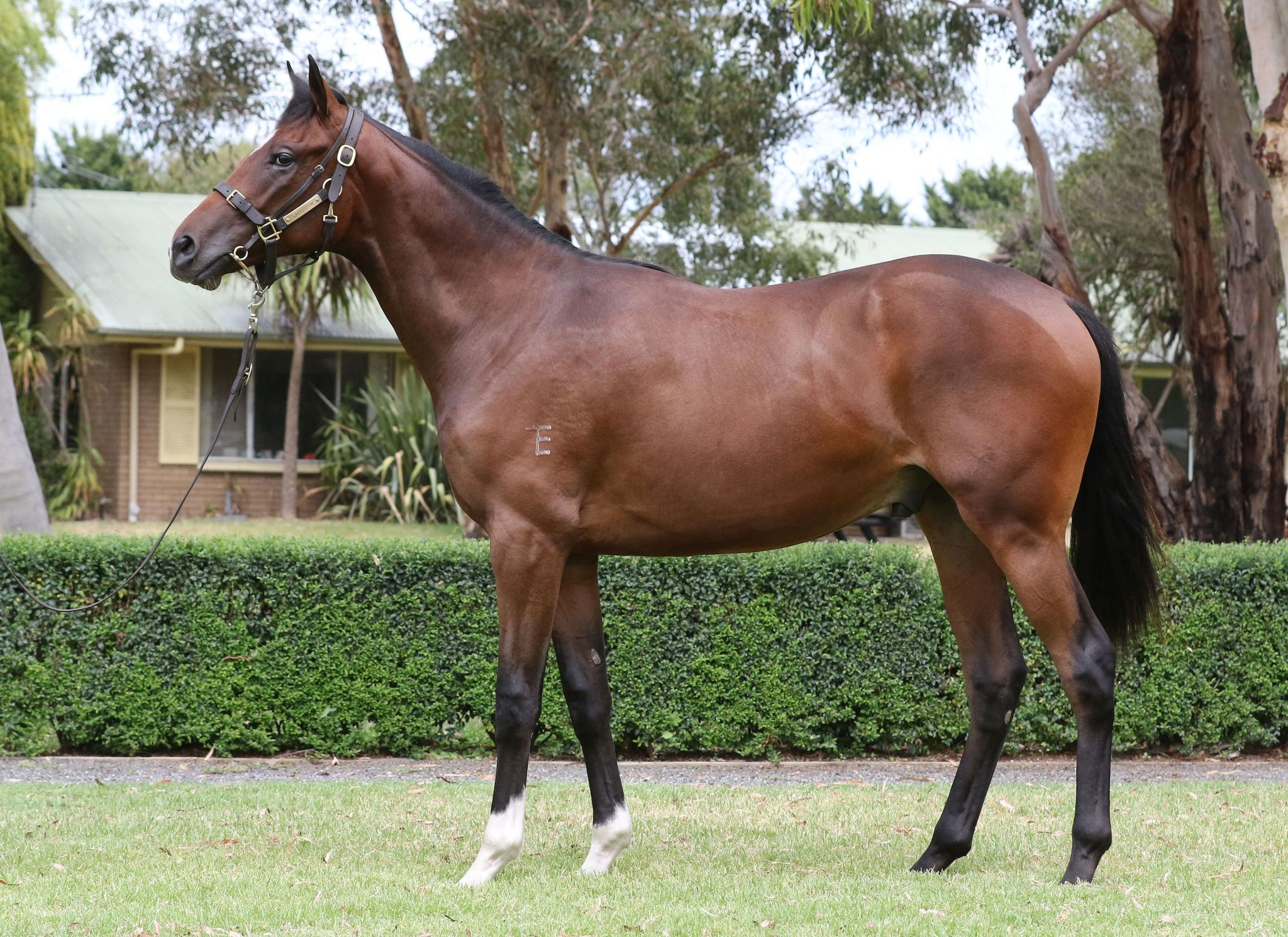 Inglis - 2018 Melbourne Premier Yearling Sale - Home