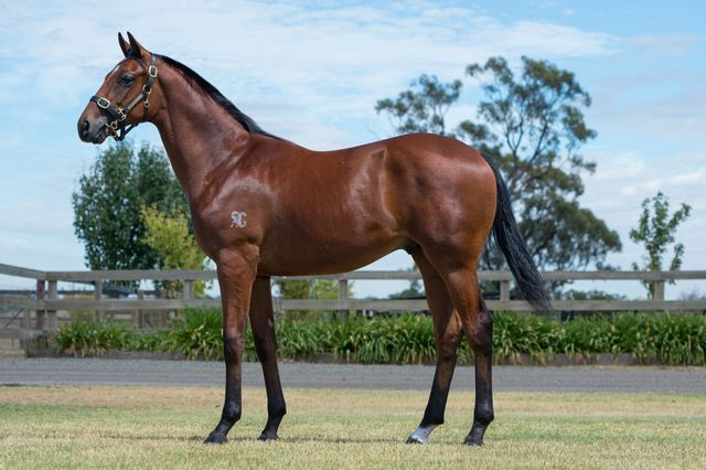 Inglis - 2018 Melbourne Premier Yearling Sale - Lot 330, Written