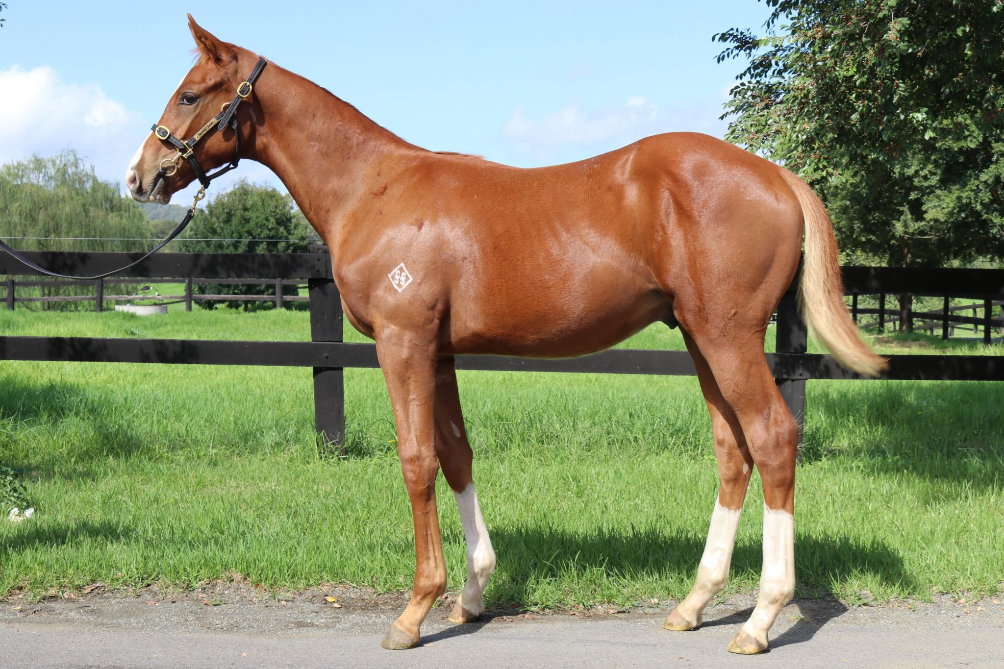 fccf881f Inglis - 2018 Australian Broodmare and Weanling Sale - Home