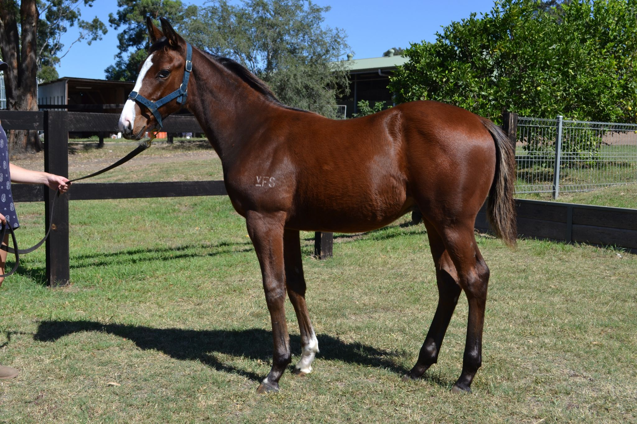 Inglis - 2018 Australian Broodmare and Weanling Sale - Home