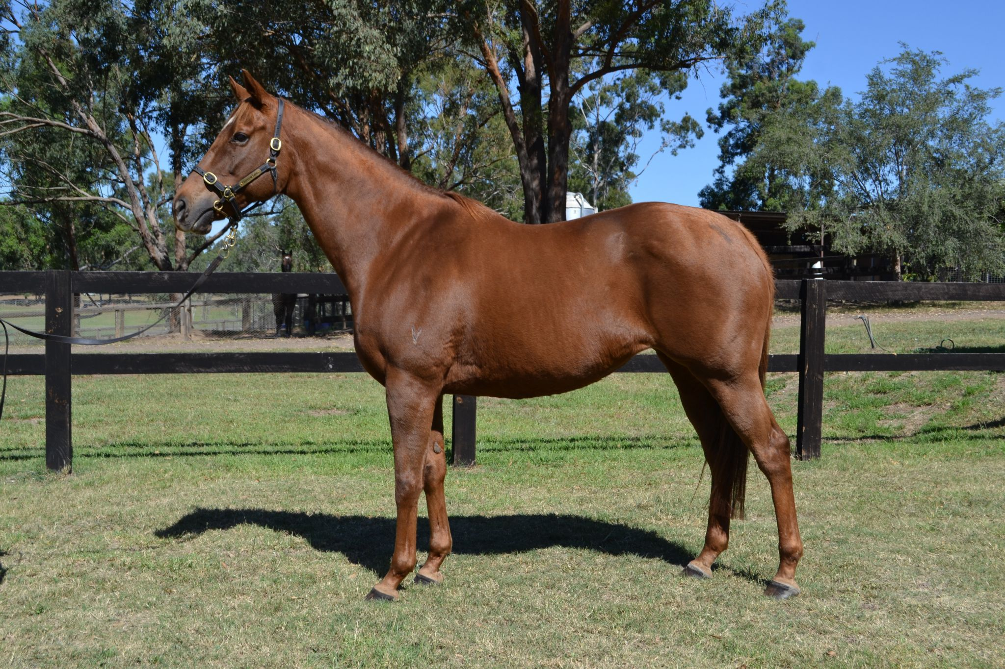 bf9483a47b042 Inglis - 2018 Australian Broodmare and Weanling Sale - Home