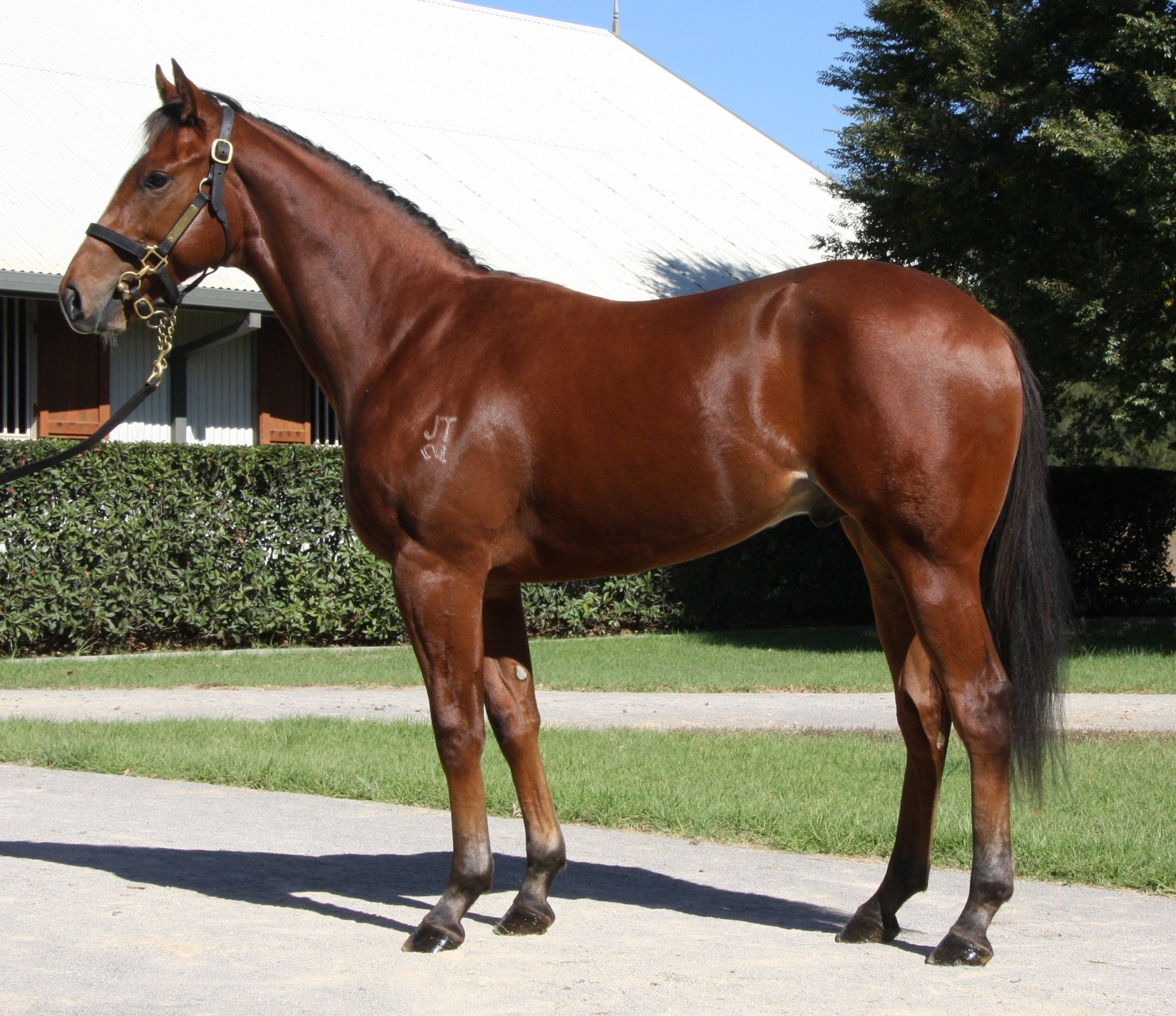 Inglis - 2018 Scone Yearling Sale - Home