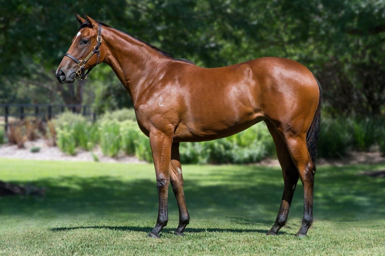 Inglis - 2019 Melbourne Premier Yearling Sale - Home