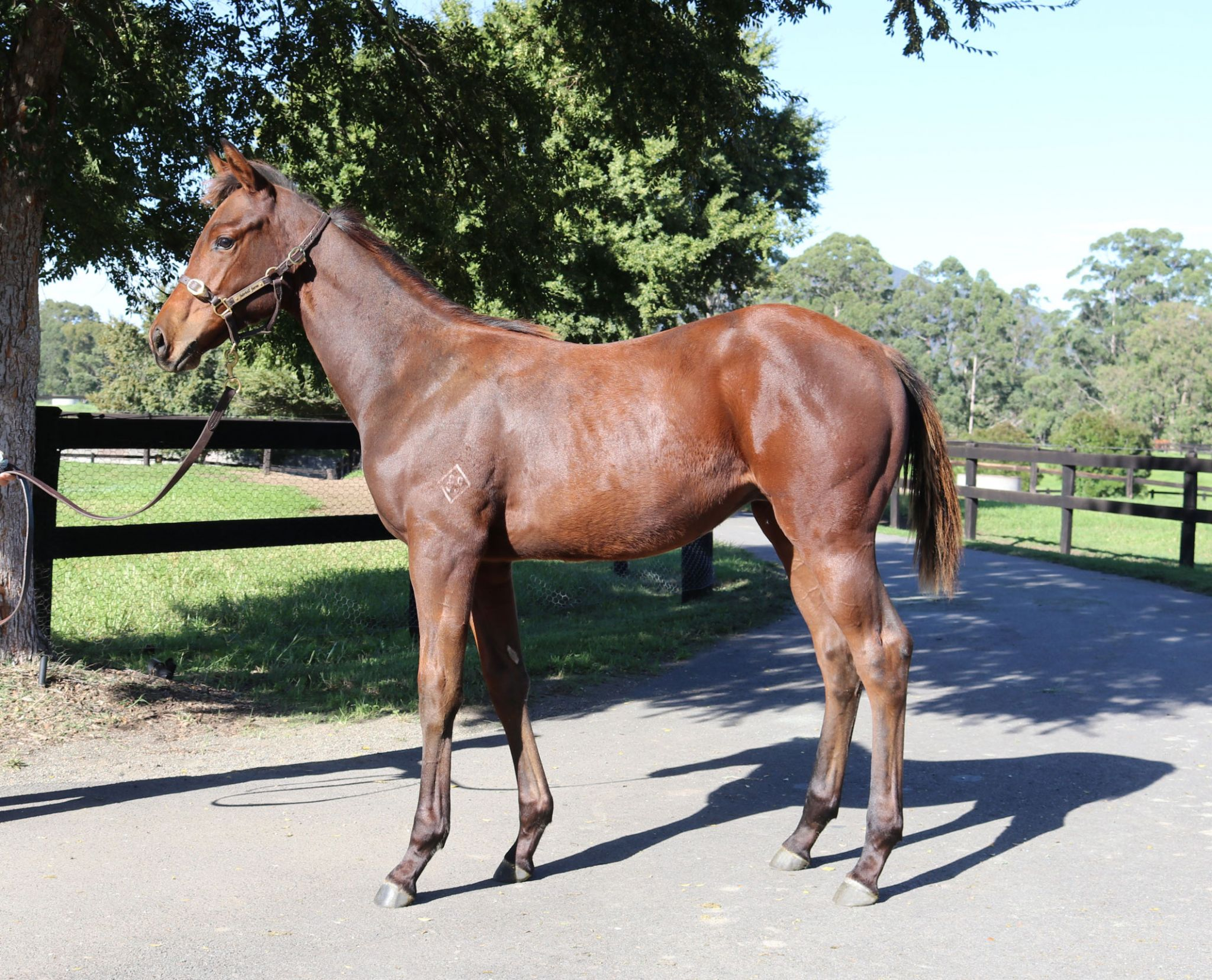 Inglis - 2019 Australian Broodmare and Weanling Sale - Home