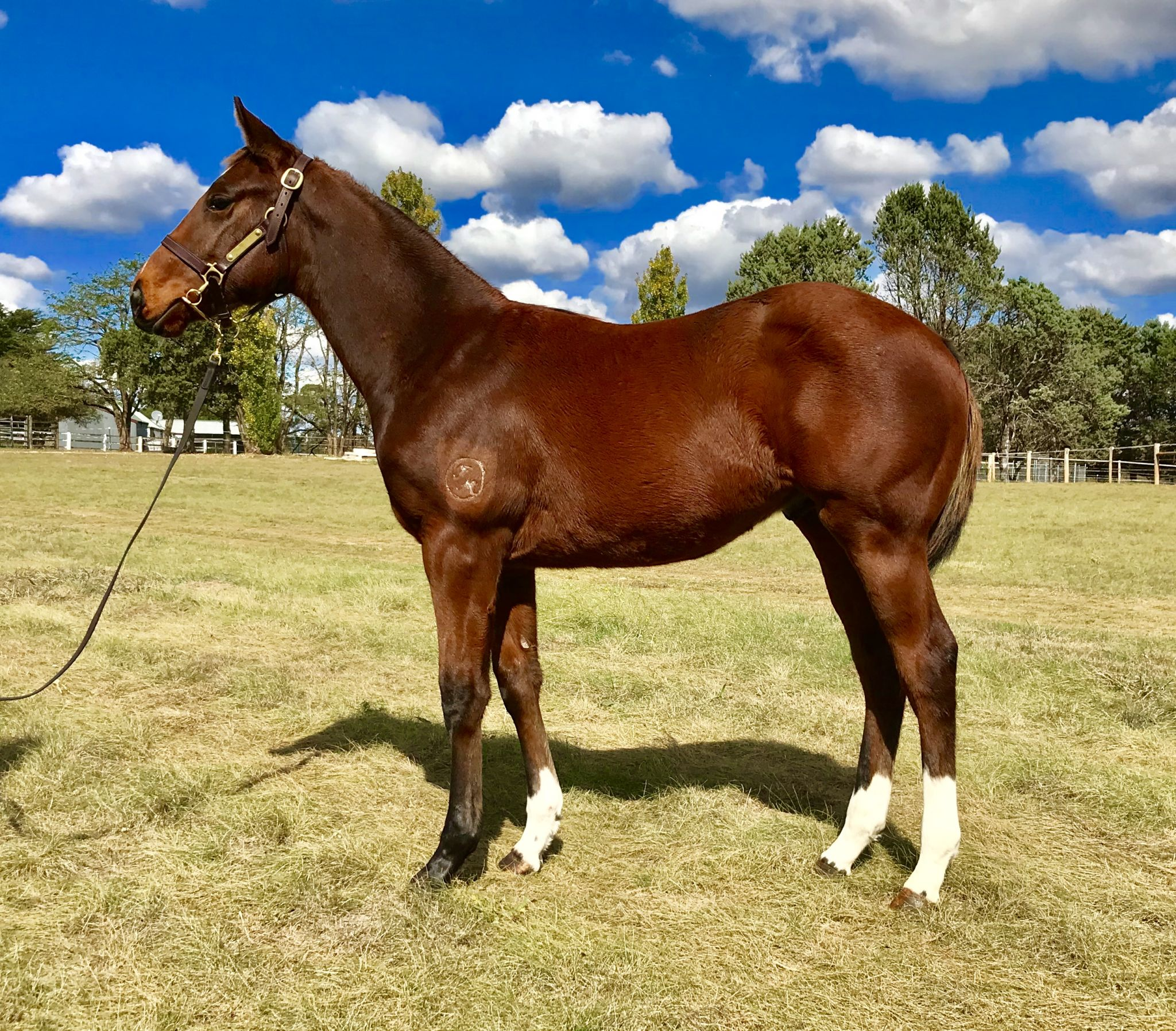 Inglis - 2019 Australian Broodmare and Weanling Sale - Search