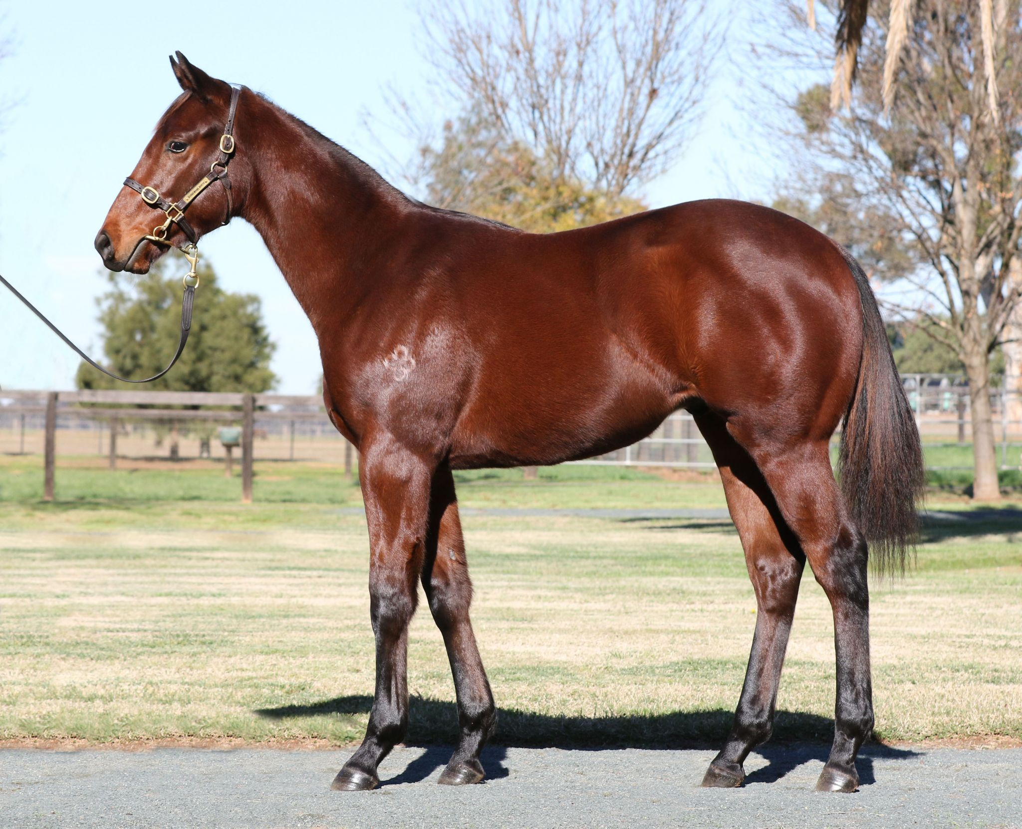 Inglis - 2019 Great Southern Sale - Home