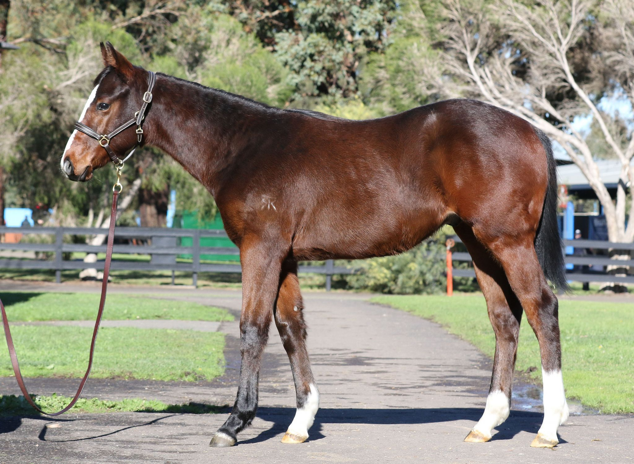 Inglis - 2019 Great Southern Sale - Lot 24, Pride of Dubai x